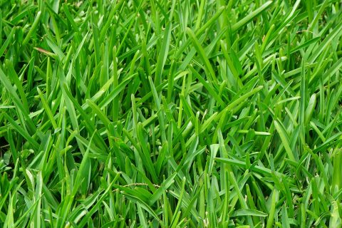 Artificial Grass & Turf Whitefield