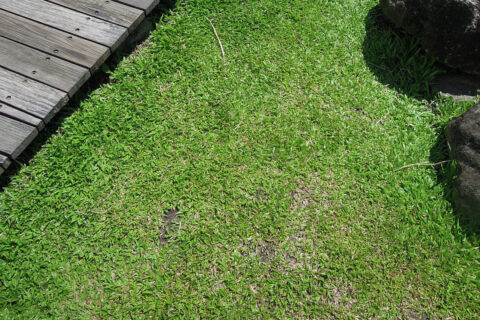 Artificial Grass in Whitefield