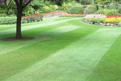 Turf laying services in Whitefield